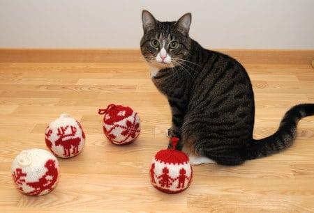 Katinas su bumbulais