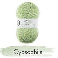 803 Gypsophila